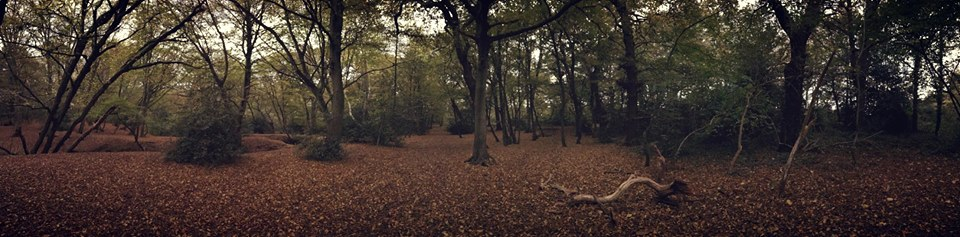 epping-forest